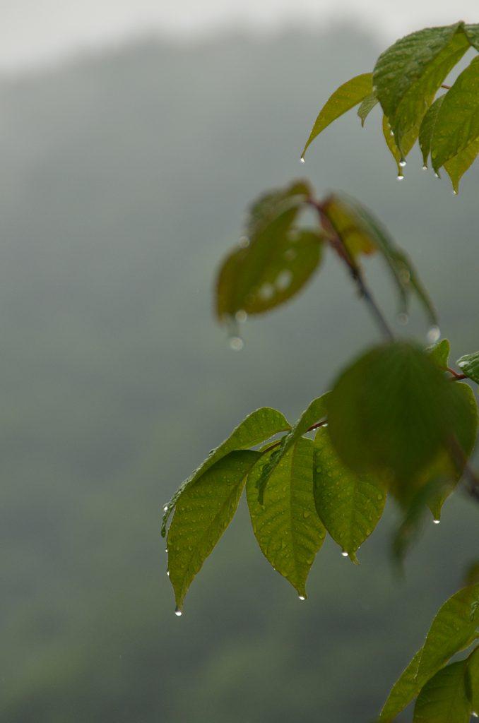 鬼の舌震 梅雨